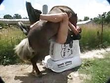 Caiu Na Net Homem Dando Cu Pro Cavalo No Zoofilia