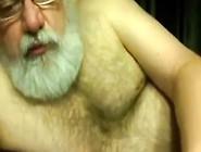 Polar Bear Playing On Webcam