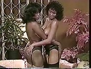 Black Beauty Trib