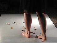 Tammy(Usa)-Barefoot Crawadads
