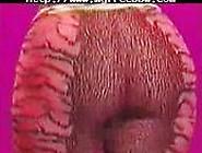 Big African Booty Bbw Fat Bbbw Sbbw Bbws Bbw Porn Plumper Fluffy