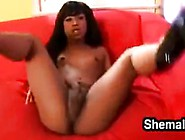 Beautiful Ebony Shemale