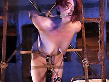 Extreme Hogtied Torturing