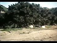 Hot Spur (1968)(Fin) Xlx