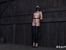 Hailey young bdsm tube
