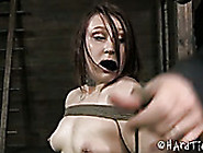 Small Tittied Tattooed Hoochie Get Sher Slit Punished In Bdsm Ro