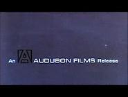 Attraction (1969) (1Parte) Xlx