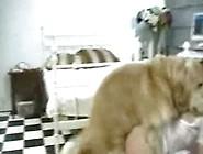 Loira Gostosa De Quatro Transando Com Cachorro Do Namorado Video