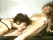Lisa Melendez Collection