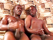 Horny Black Gays Stroke Their Huge Cocks Together