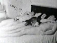Vivid 1950S Vintage Porn (1)