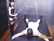 Horny Stallion Receives A Proper Caning From His Hot Brunette Do